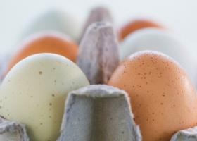 Яичная скорлупа как удобрение для огорода
