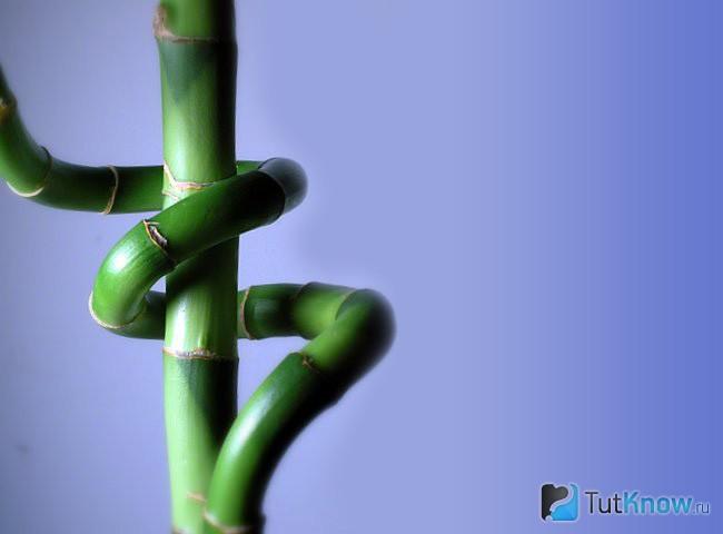 Как закрутить стебель бамбука