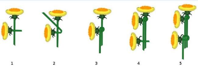 Схема плетения венка из одуванчиков