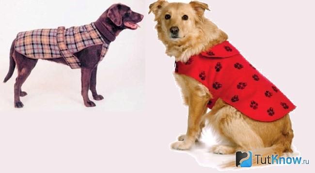 Собаки в попонах