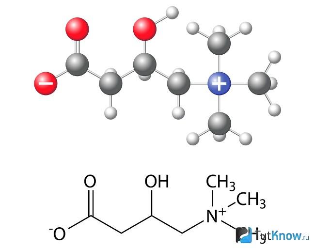 Левокарнитин как элемент Стабилина