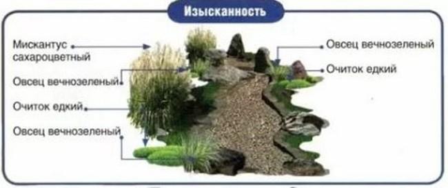 Схема высадки растений для изысканного ручейка
