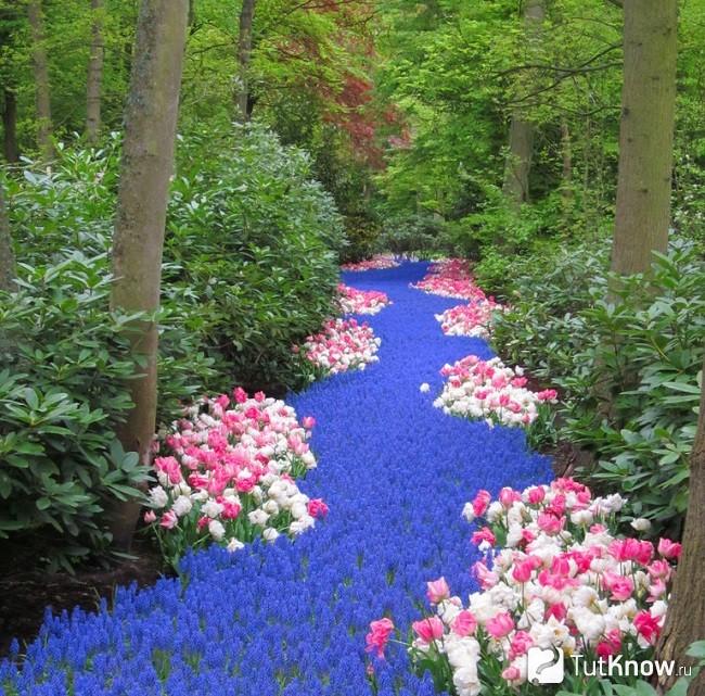 Сухой ручей - цветочная река