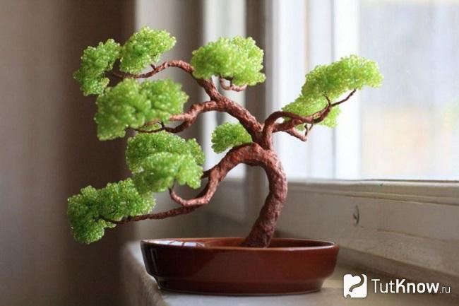Декоративное деревце бонсай