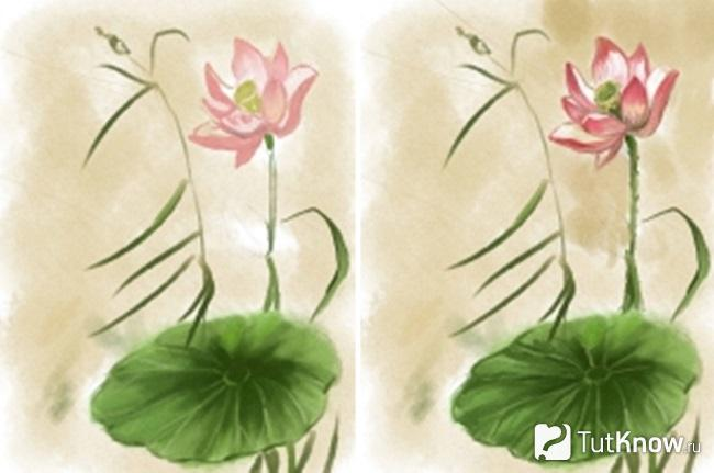 Прорисовка розовых лепестков лотоса