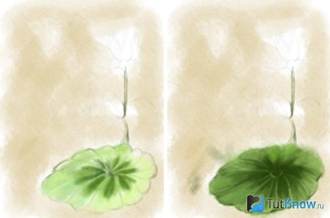 Стебель и лист кувшинки