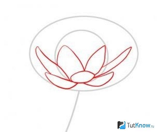 Сердцевина и лепестки цветка