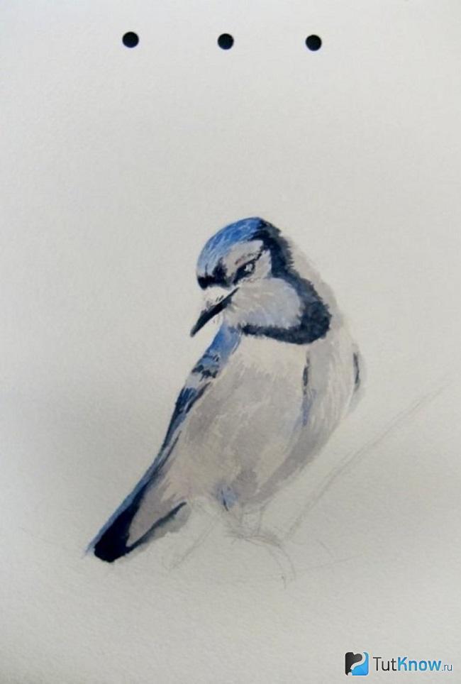 Завершение прорисовки птички